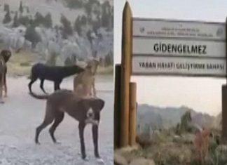Decenas de perros abandonados en Turquía