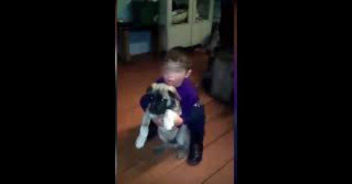 Dos perros cuidaron de un niño extraviado en un bosque
