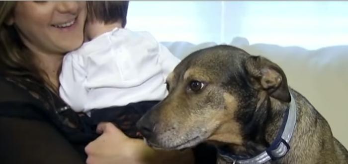 Duke salvó la vida de Harper