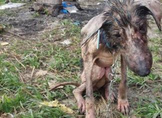 En Irán encadenan a los perros para que mueran de hambre