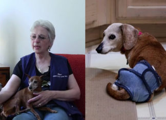 Esta mujer creó un hogar para ayudar a todos los perros de edad que han sido abandonados