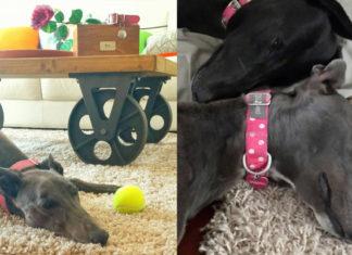 Esta perra no logra aceptar que su mejor amiga ha fallecido