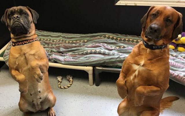 Estas perras intentaron regresar a su antiguo hogar porque no logran asimilar la muerte de su humana