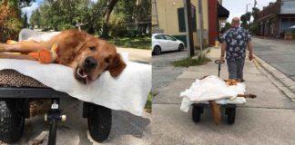 Este perro enfermo es muy feliz dando paseos con su humano cada día