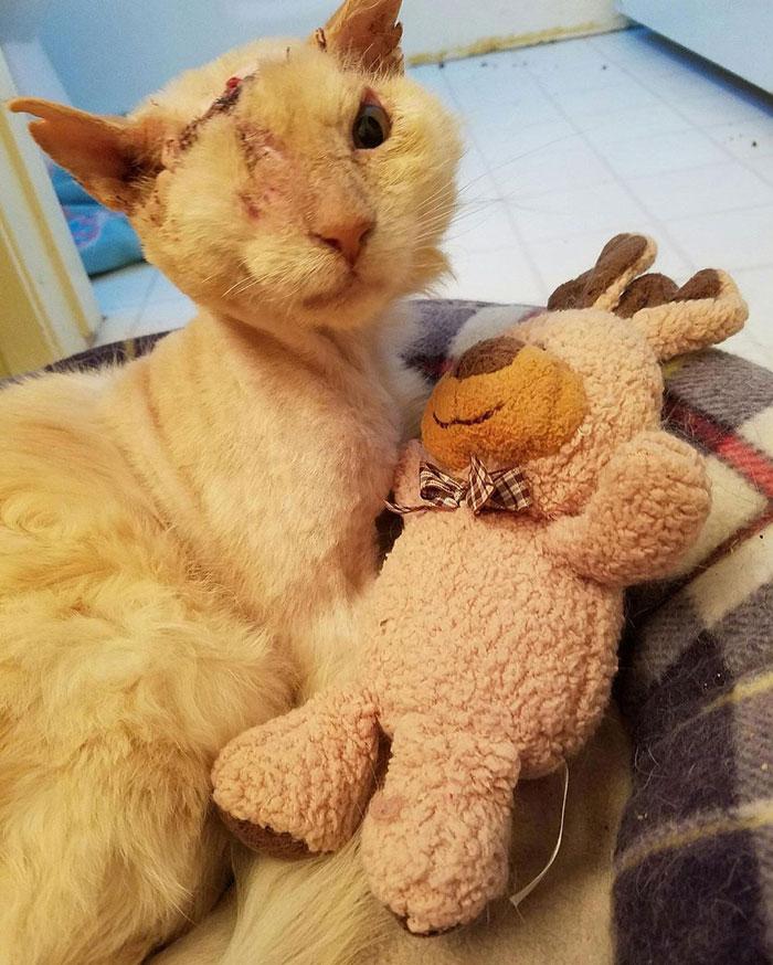 Gato fue rociado con ácido