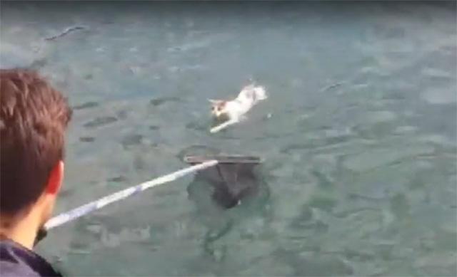 Gato perdido en el mar es rescatado