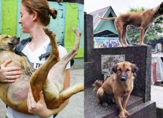 Gran cantidad de perros abandonados habitan un cementerio de Filipinas y una mujer es quien los cuida
