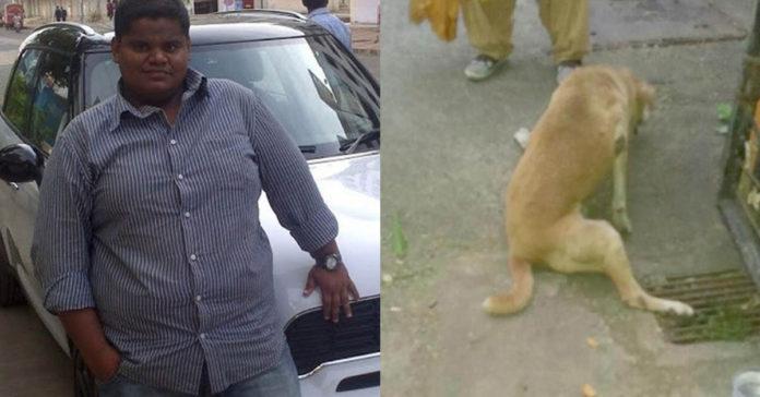 Hombre atropelló a un perro por haber orinado en las llantas de su auto