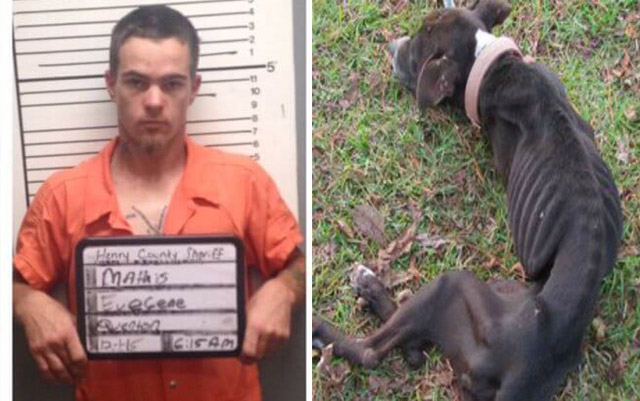 Hombre ha sido condenado por hacer aguantar hambre a sus seis perros a tal punto de caer en canibalismo