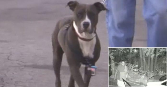 Hombre rescató a una Pit bull gracias a su cámara de seguridad