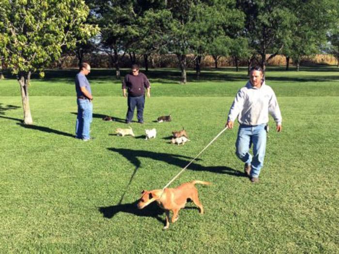 Hombres rescataros unos perros abandonados