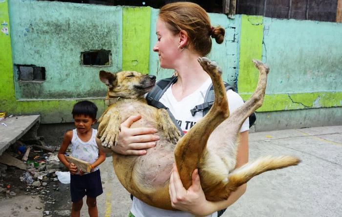 Mujer brinda su ayuda a perros abandonados