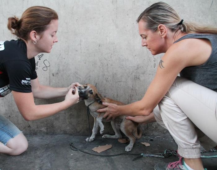 Mujer vacunando perros
