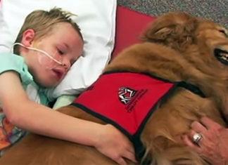 Niño en estado vegetativo sobrevive gracias a un perro