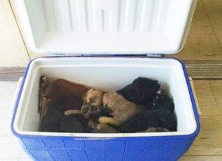 Nueve cachorros abandonados fueron encontrados en un refrigerador