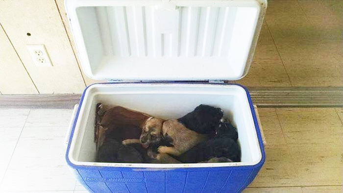 Nove cuccioli in frigorifero