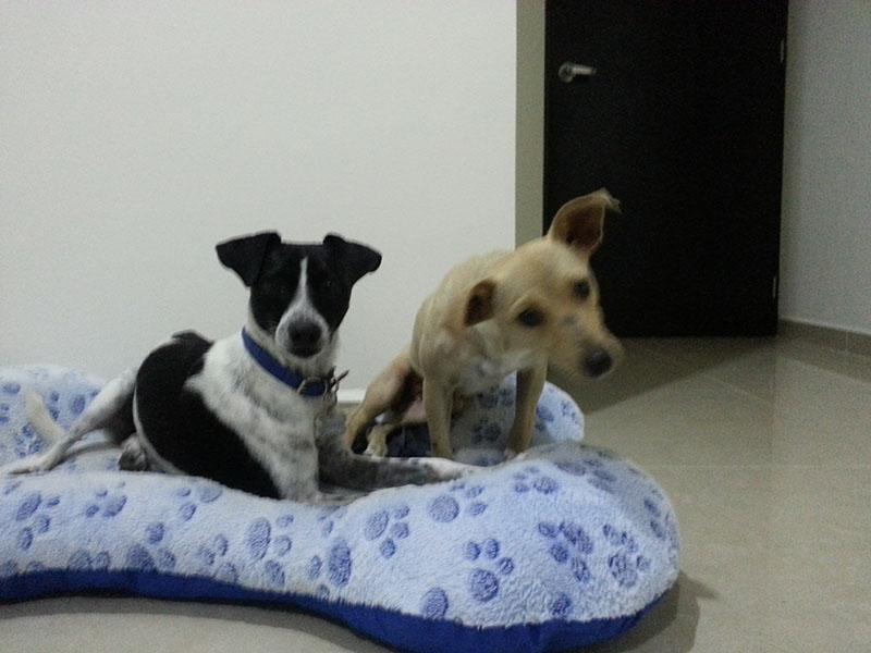 Patita y su hermano