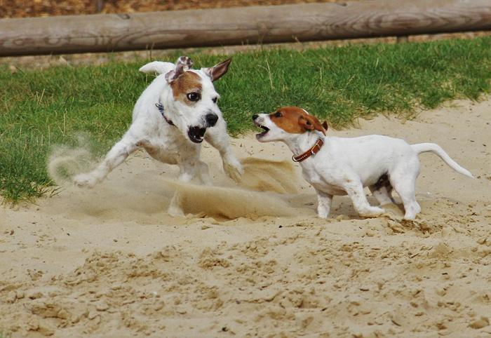 Lo más importante es prevenir las peleas de perros