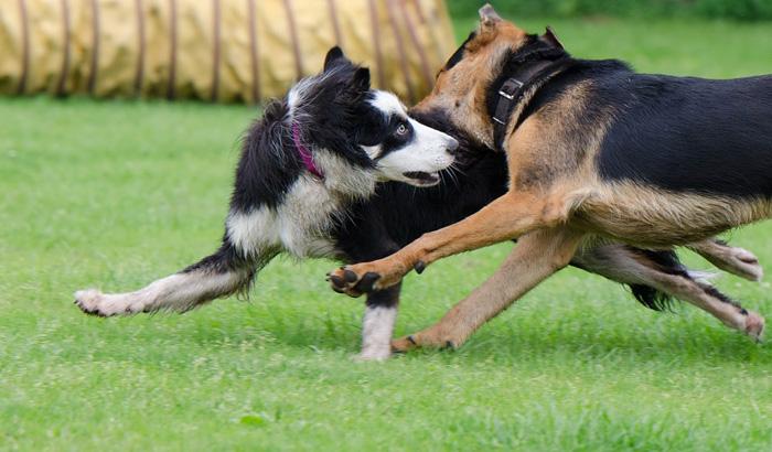 Cuando un perro no se encuentra apoyando sus patas en el suelo su inseguridad aumenta