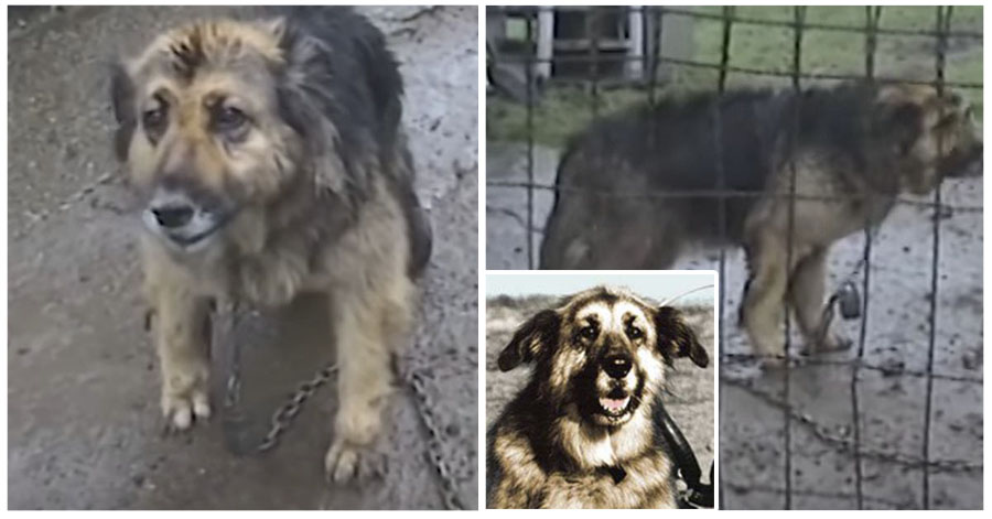 Perra estuvo encadenada y fue rescatada después de 10 años