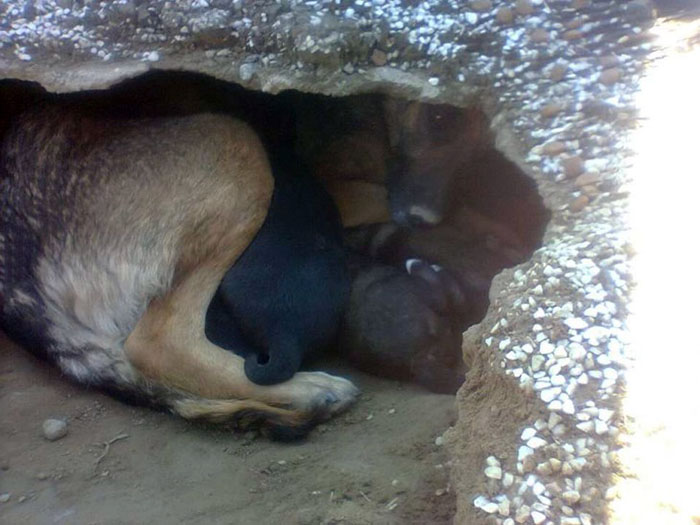 Perra vivía con sus cachorros en el cementerio