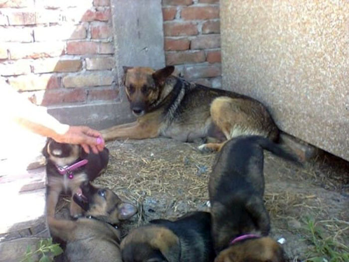 Perra y sus cachorros