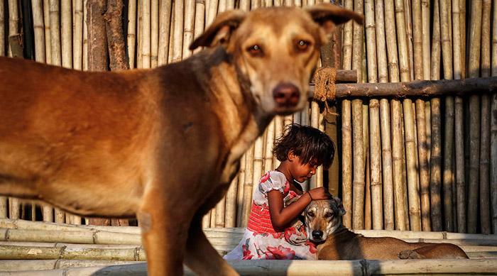 Perro callejero de la india