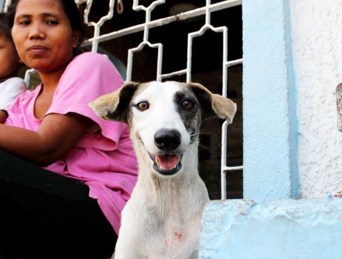 Perro callejero feliz