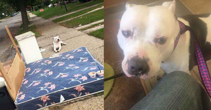 Perro esperó por horas junto a la basura el regreso de su familia