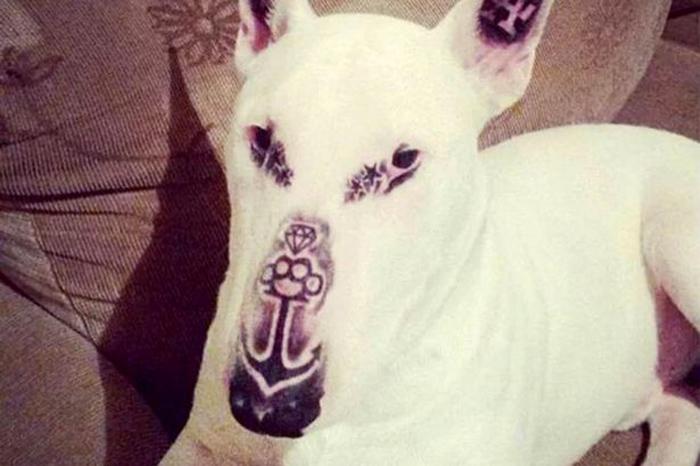 Perro fue tatuado por su humano
