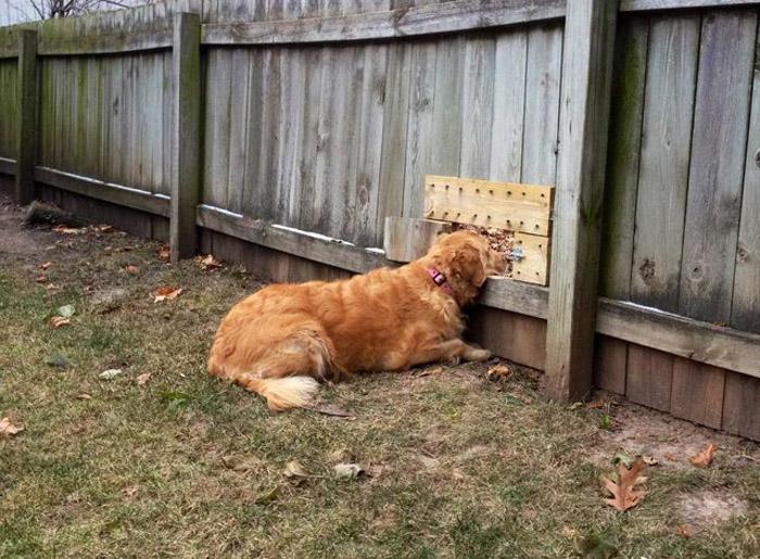 Perro haciendo visita a su vecino