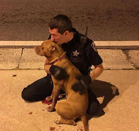 Perro herido y oficial de policía