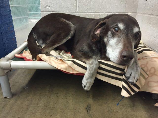 Perro salvó a su familia de un incendio y lo abandonaron