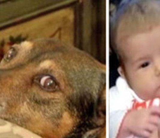 Perro salvó la vida de una bebé de tan sólo 9 semanas de vida