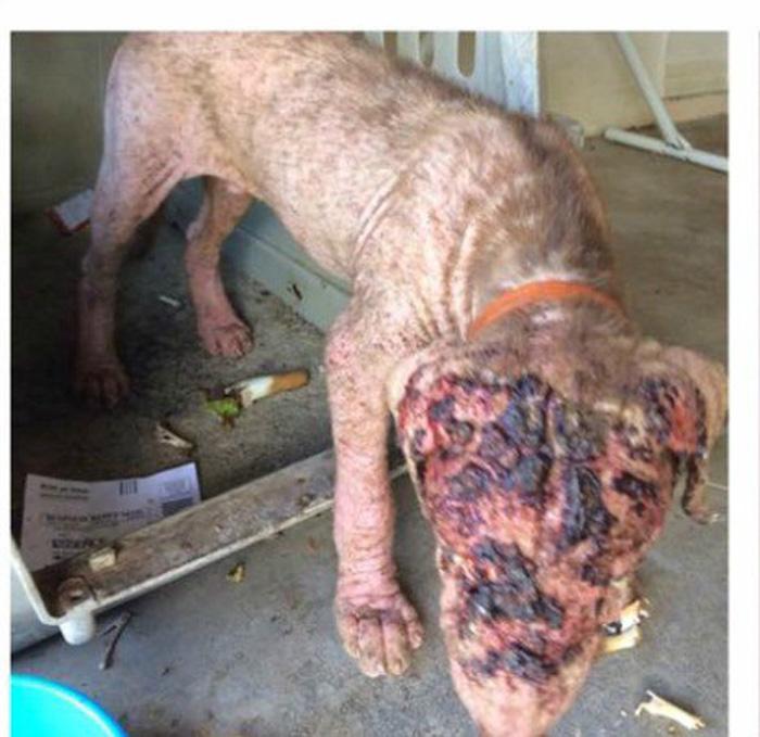 Perro sufría maltrato