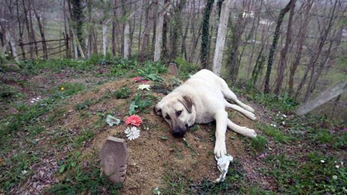 Perro visita la tumba de su dueño