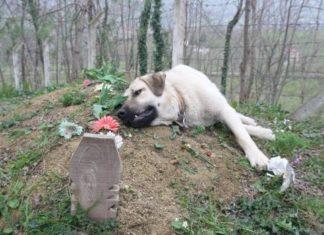 Perro visita la tumba de su humano desde el 2014