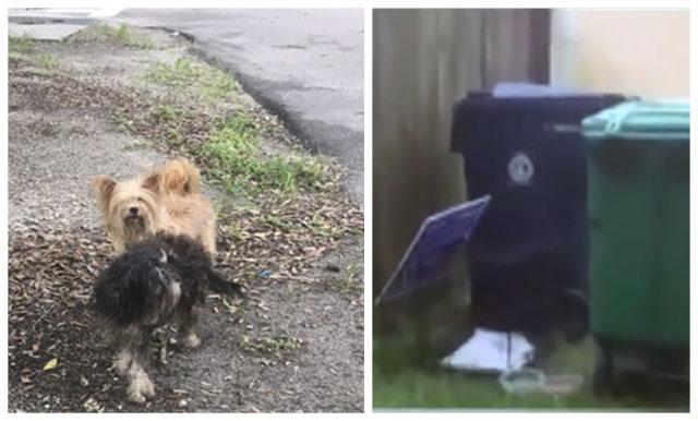 Perros abandonados como basura durante el huracán Matthew