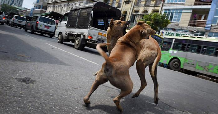 Perros de la India