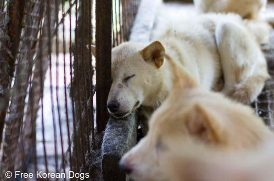 Perros destinados para el sacrificio