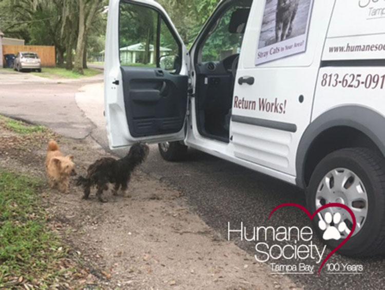 Perros rescatados en Tampa durante el huracán