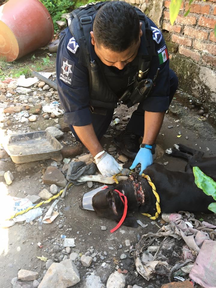 Rescate perro encadenado