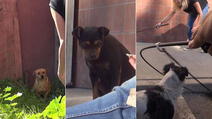 Tres perros fueron rescatados tras quedarse sin hogar