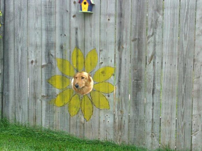 Ventana para perros