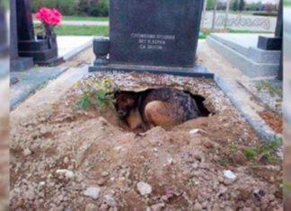 Verdadera historia del perro que vivía en una tumba