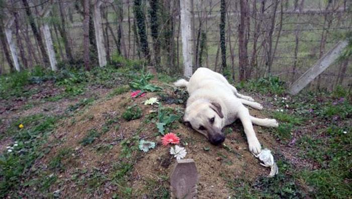 Zozo visita la tumba de su dueño