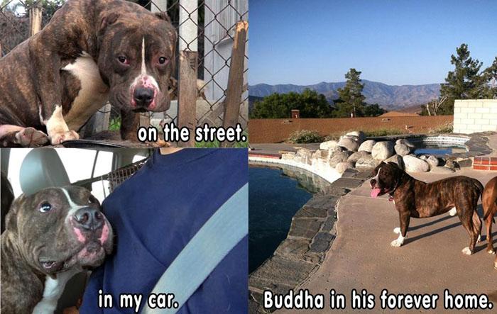 buddha fue adoptado