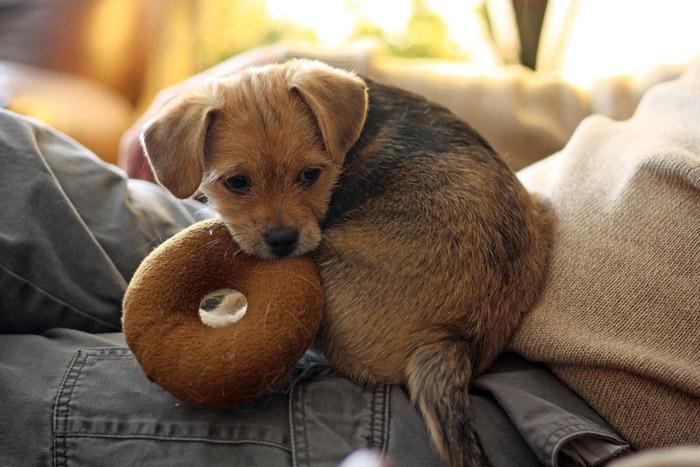 cachorro con su juguete