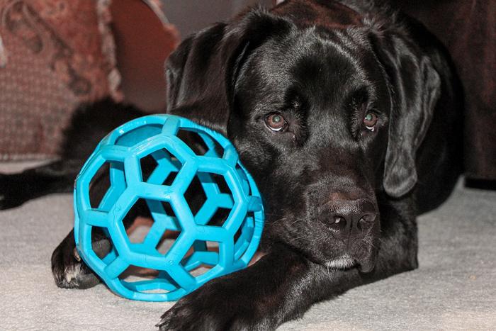 La cantidad de juguetes que debe tener un perro son como mínimo 3