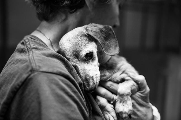 muñeca, perra de 18 años